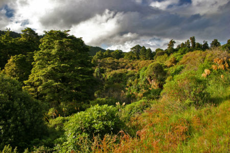 Whakapapa Village, National Park, , Neuseeland