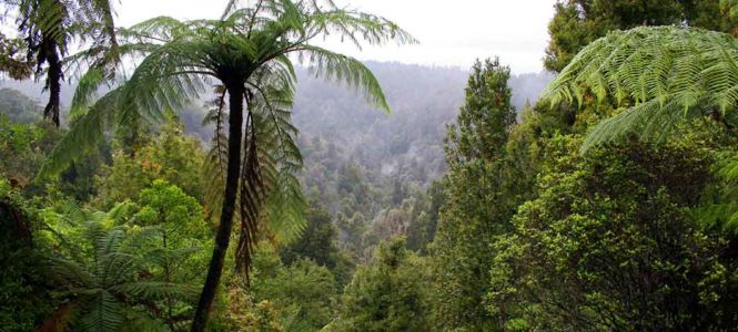 Whangamomona, Matau, , Neuseeland