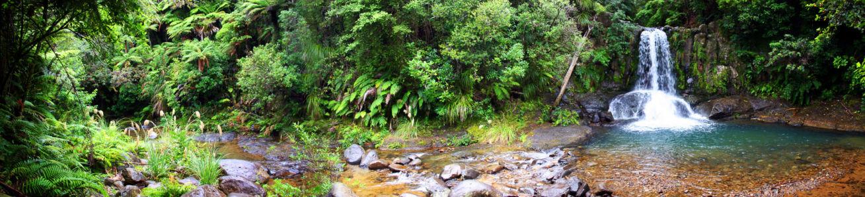 Ahimia, Ahimia, , Neuseeland