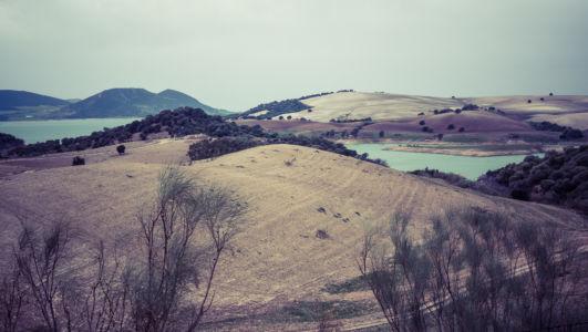 Algar, Perdiz, La, Andalucia, Spain