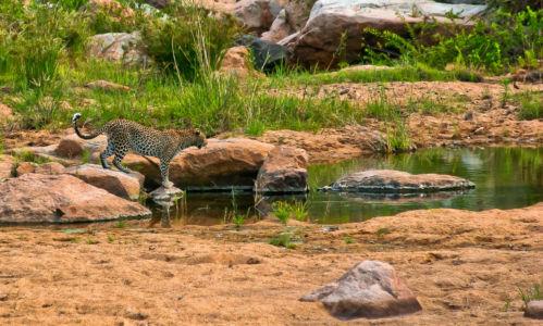 Skukuza, Skukuza, Mpumalanga, Südafrika