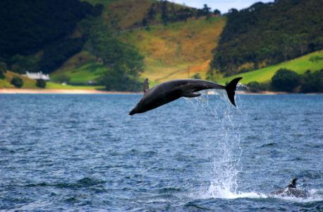 Cooks Beach, Whitianga, , Neuseeland
