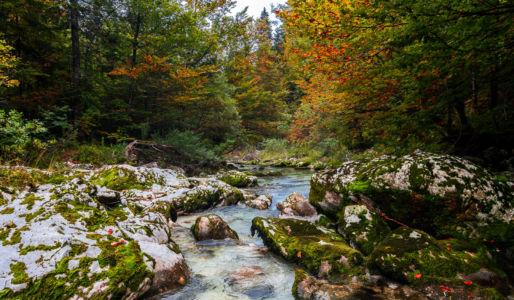 Studor v Bohinju, Srednja vas v Bohinju, , Slowenien