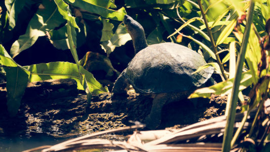 Cahuita, Cahuita, Costa Rica, GPS (9,735860; -82,838648)