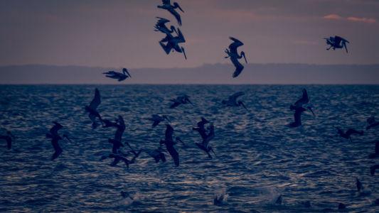 Playa Agujas, Agujas, Costa Rica, GPS (9,726663; -84,650773)
