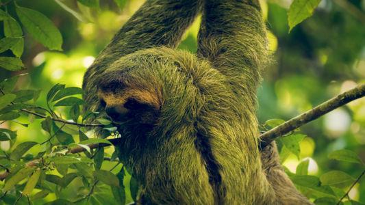 Quepos, Manuel Antonio, Costa Rica, GPS (9,390973; -84,141320)