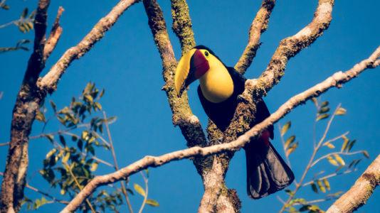 Sierpe, Mogos, Costa Rica, GPS (8,737030; -83,428248)