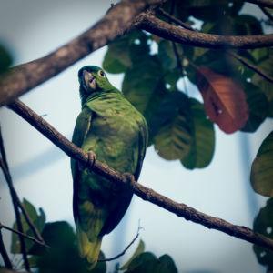 Sierpe, Potrero, Costa Rica, GPS (8,779880; -83,512808)