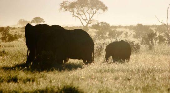 Tsavo Nationalpark East, , Coast, Kenia