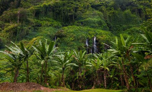 Bois-Blanc, Sainte-Rose, Réunion, Réunion