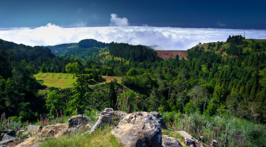 Eira da Cruz, Funchal, Ilha da Madeira, Portugal
