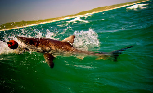 Gansbaai, Gans Bay, Western Cape, Südafrika