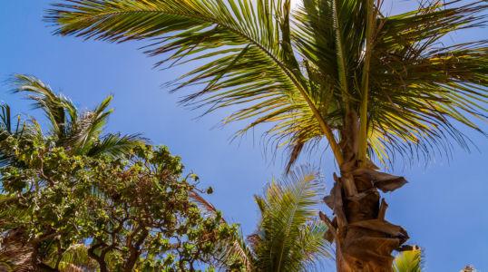 Boucan Canot, Saint-Paul, Réunion, Réunion