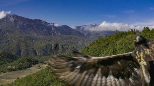 Albania Eagle Catches Drone
