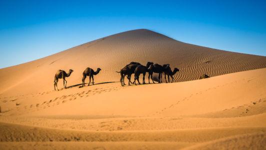 El Gouera, Souss-Massa-Draa, Morocco