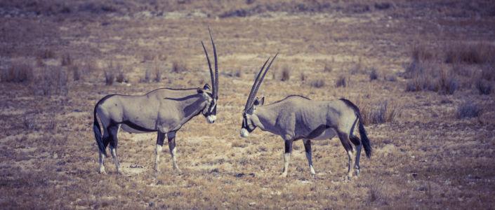 Halali, Namibia, GPS (-19,046675; 16,252413)