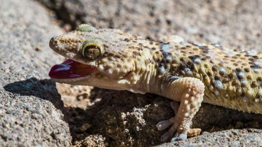 Nauchas, Namibia, GPS (-23,660511; 16,178681)