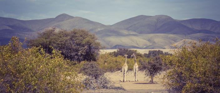 Omanye, Namibia, GPS (-18,744508; 12,935091)