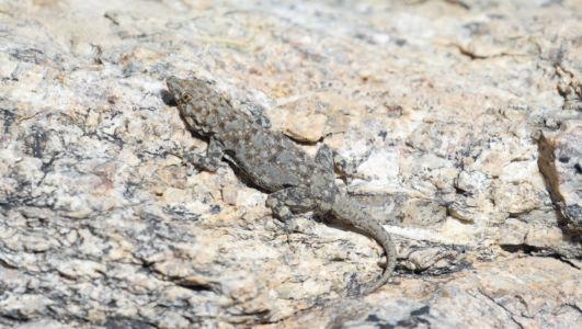 Otjovasandu, Namibia, GPS (-19,317328; 14,468994)