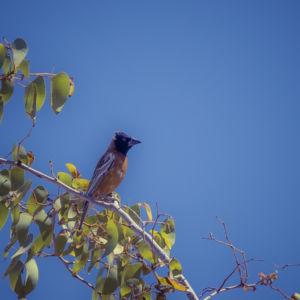 Otjovasandu, Namibia, GPS (-19,317334; 14,469003)