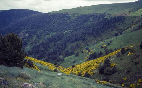 Pardines, Pyrenees, GPS (42,341133; 2,229610)