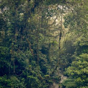 Piedades Norte, Balsa, Costa Rica, GPS (10,199958; -84,523123)