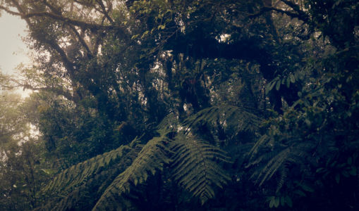 Piedades Norte, Bureal, Costa Rica, GPS (10,136937; -84,562655)