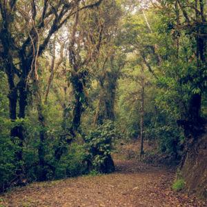 Piedades Norte, Bureal, Costa Rica, GPS (10,136938; -84,562653)