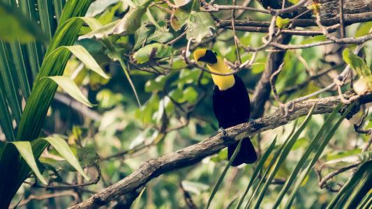 Puerto Jimenez, Carate, Costa Rica, GPS (8,440672; -83,446895)