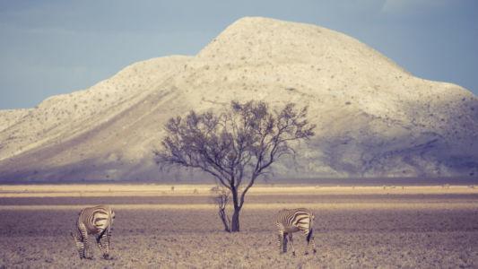 Samara, Namibia, GPS (-23,783099; 15,913540)