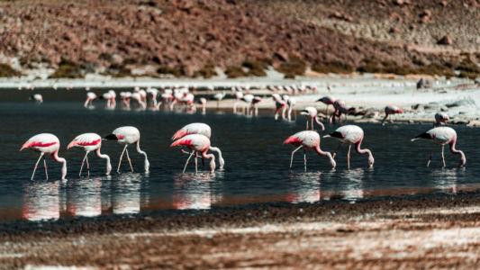 San Pedro De Atacama - Chile - GPS (-22,609363; -68,060762)