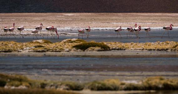 San Pedro De Atacama - Chile - GPS (-23,954782; -67,580297)