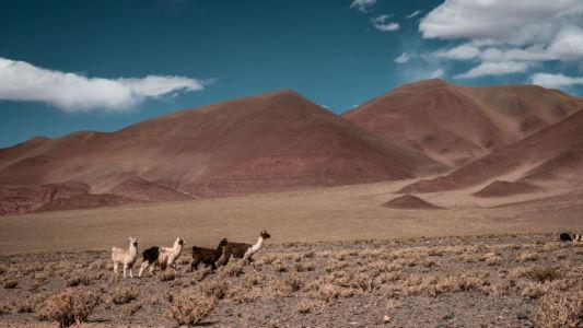 Santa Rosa De Pastos Grandes, Salta, Argentina, GPS (-24,845062; -66,935837)