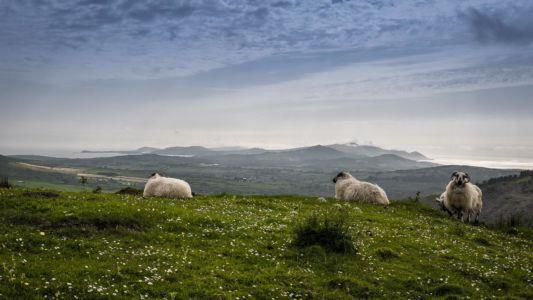 Shantullig North, County Cork, Ireland