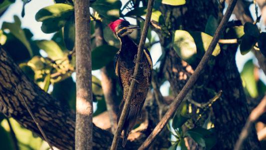 Sierpe, Potrero, Costa Rica, GPS (8,779797; -83,512932)