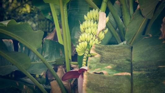 Sierpe, Rincon, Costa Rica, GPS (8,741665; -83,496140)