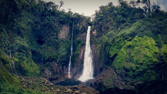 Toro Amarillo, Río Segundo, Costa Rica, GPS (10,254267; -84,272742)