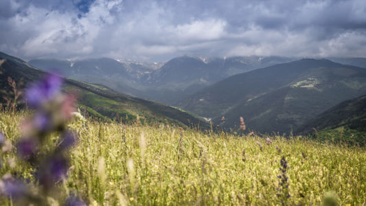 Tregura De Dalt, Pyrenees, GPS (42,346338; 2,283043)