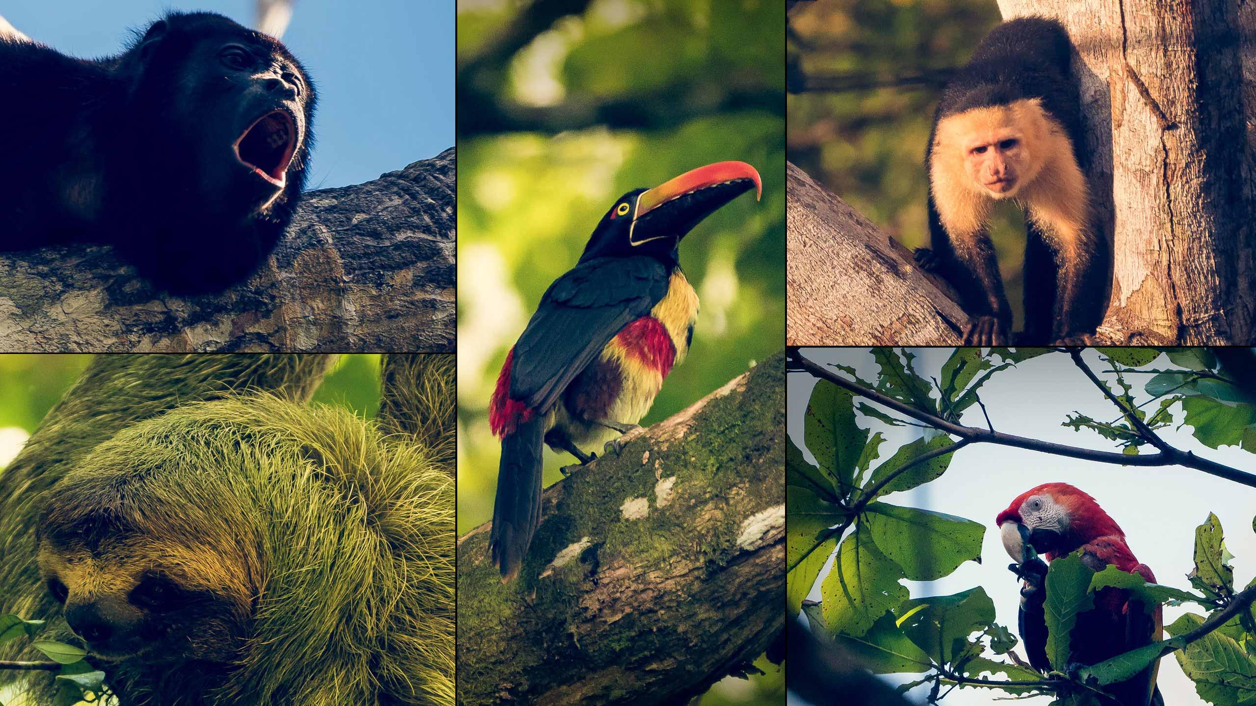 Costa Rica Blog 6